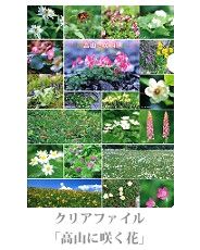 clearfile_01