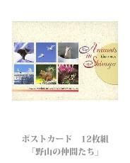 postcard_13