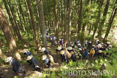 杉林の急坂を上る