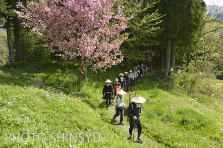 桜も満開でお出迎え