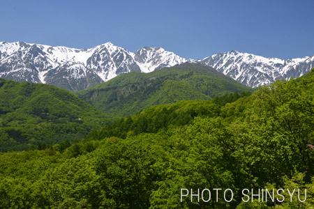 新緑の山裾と白馬三山