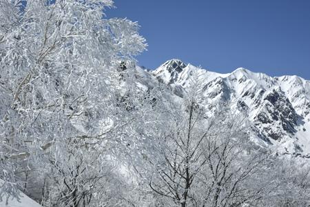霧氷のダケカンバと五竜岳