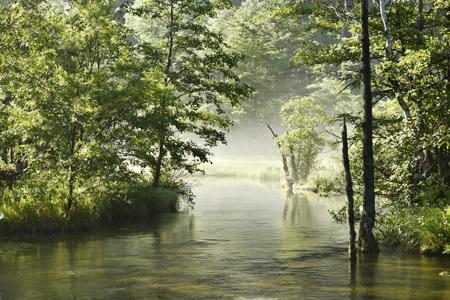 霧晴れゆく田代池