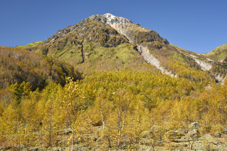 カラマツが黄葉に染まる焼岳