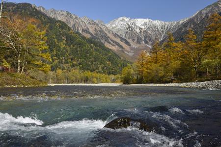 カラマツ黄葉が梓川を彩る