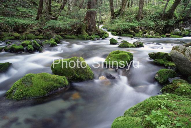 梓川 原生林の流れ